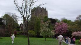 Blarney Castle (14)