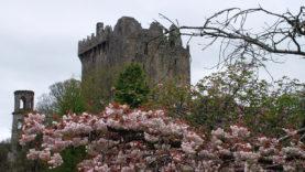 Blarney Castle (17)
