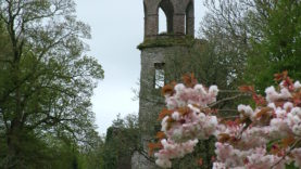 Blarney Castle (19)