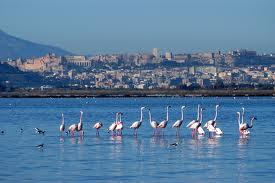 Cagliari 19