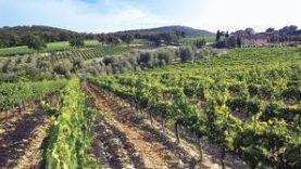 Montalcino5