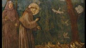 San Francesco uccelli