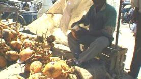 ZANZIBAR: il mercato